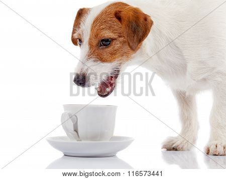 Small Doggie Of Breed A Jack Russell Terrier And White Cup.