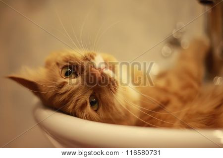 portrait of a cat lying in the bath