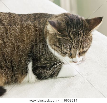 Sleeping Cat Over White Bed