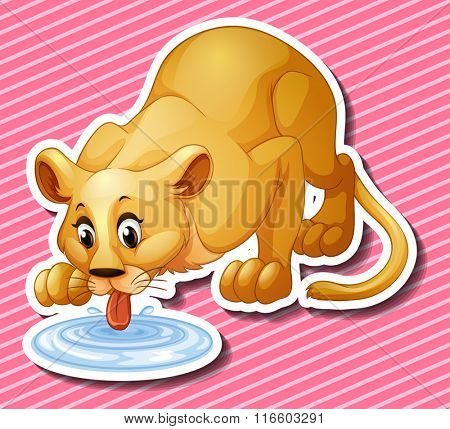 Cute lion drinking water from the puddle illustration