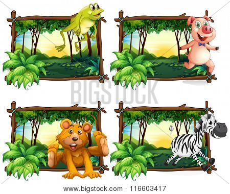 Four frames of wild animals in the jungle illustration