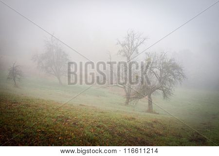 In nature after fog