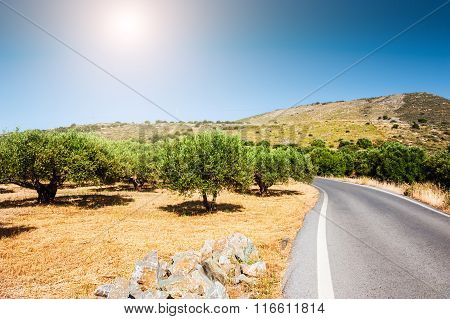 Road Between The Mountains And Groves Of Olive Trees.
