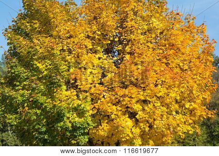 Discolored Leaves On The Trees