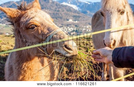 man feeding a donkeys