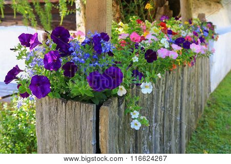 Handmade wooden box full of colorful Petunia and Obelia flowers in the garden