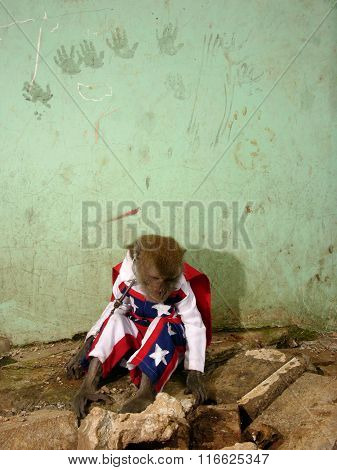 A chained monkey wearing an Evel Knievel-style American stars-and-stripes outfit performs in Jakarta