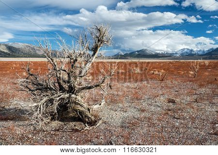 Dead Tree On Withered Field With Background Of Sierra Nevada Mou