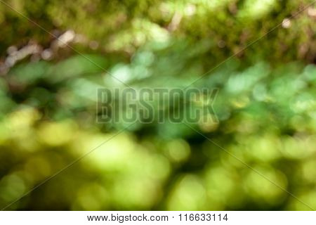 green background with natural bokeh, soft focus. Header for website