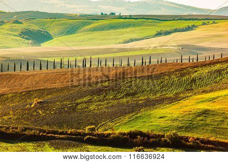 Tuscany fields autumn landscape, Italy. Harvest season makes the countryside hills and valleys nostalgic and picturesque. Cypress trees road