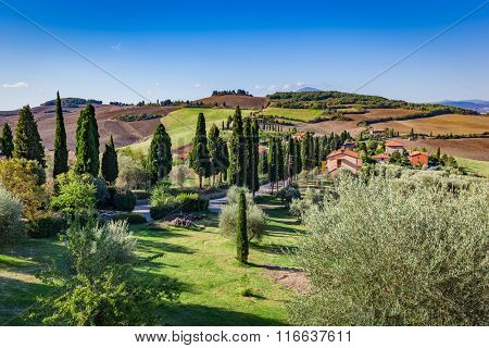 Tuscany countryside landscape with cypress trees, farms and green fields, Italy. View from Monticchiello