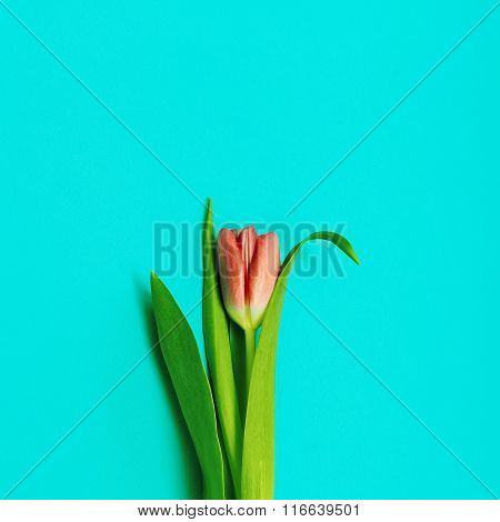 Tulips and Love. Minimal Fashion Style. Spring is coming