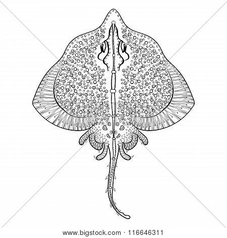 Zentangle Stingray totem for adult anti stress Coloring Page for