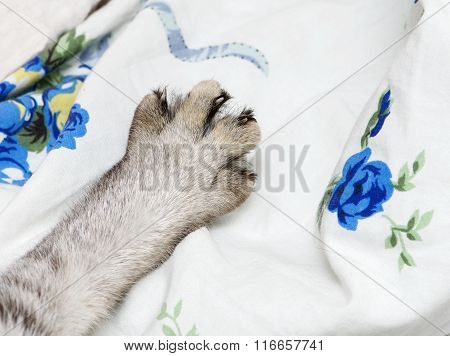 Cats leg close up, only cat leg, cat leg close up, domestic animal fragment photo, cat hiding, cat l