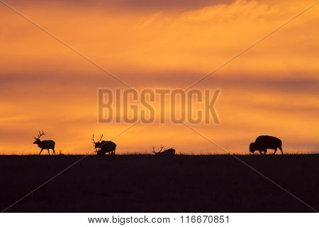 elk and bison silhouette with Kansas sunrise