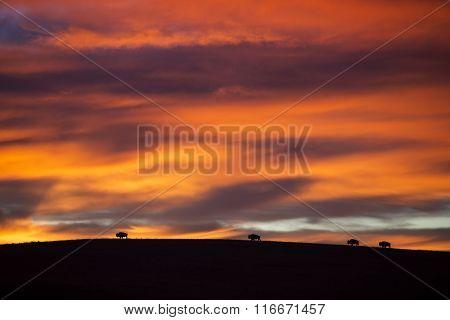 four bison silhouette with Kansas sunrise