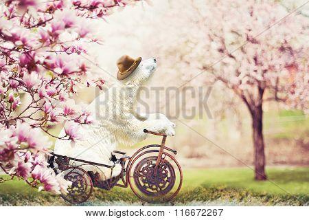 Happy polart bear and magnolia trees