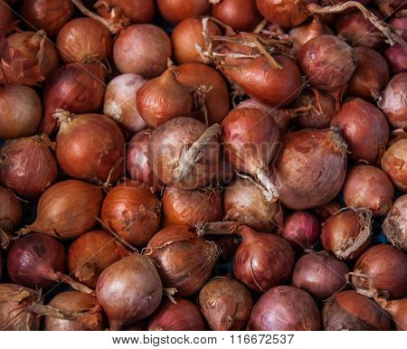 Shallot In The Market.