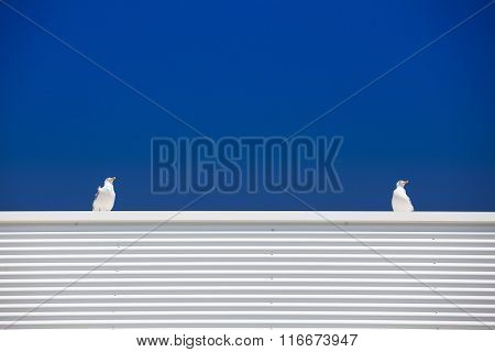 Two Seagulls On The White Roof