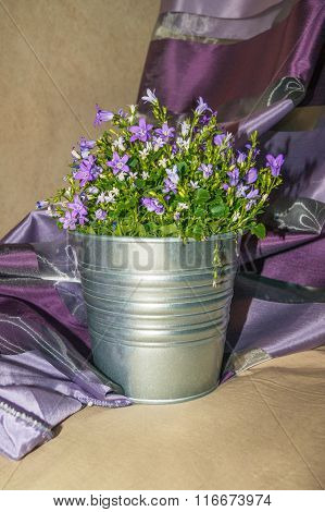 Harebell In A Pot_1