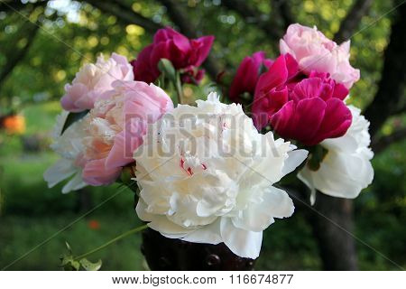 Bunch of colorful peonies in the setting sun