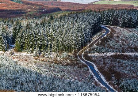 Fir Trees And Road With Light Snow Covering, United Kingdom Countryside.