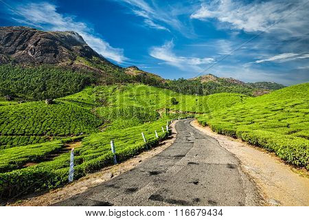 Scenic road in green tea plantations, Munnar, Kerala state, India