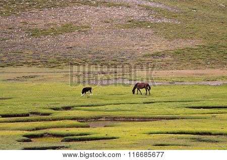 Horse and calf in a field