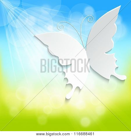 Butterfly On Spring Background