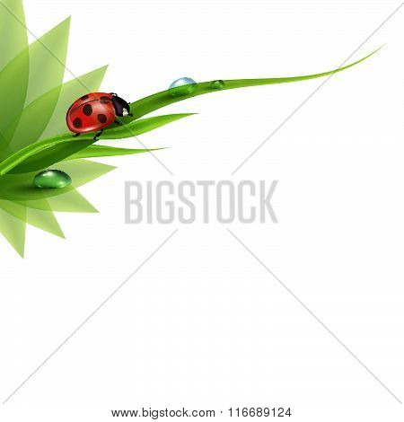 Green Grass With Dew And Ladybird