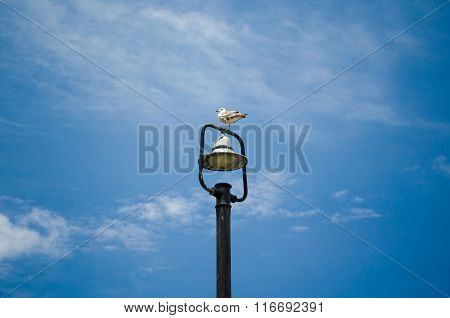 Beautiful seagull sitting on a top of street lamp