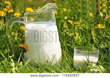 Stock Photo: Jug of milk on the meadow