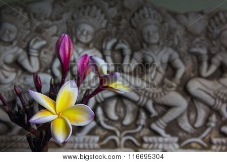 Beautiful Flower Plumeria Or Frangipani In Asia  Boutique Style Background