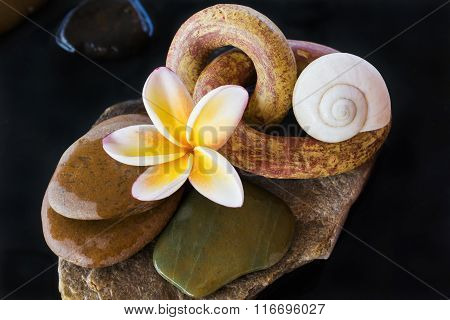 Flower Frangipani Or Plumeria,pebble And Shell On Water