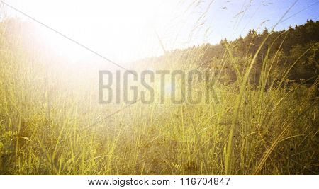 Spring or summer background with grass in the garden
