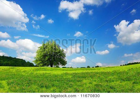 Springtime Landscape