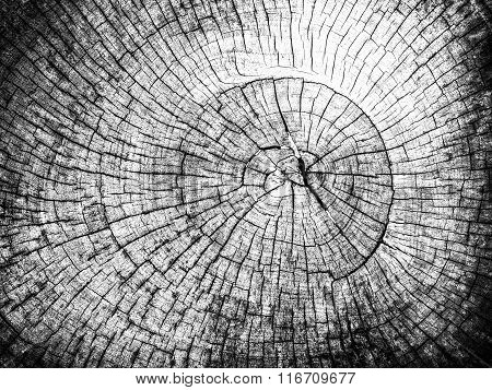 Old Tree Stump Background - Monochrome Hight Contrast Style