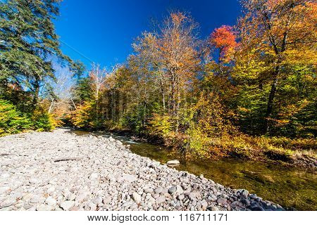 Fall Colors On A Remote Stream In The Catskills