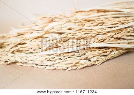 Paddy Or Rice Grain (oryza) On Brown Background