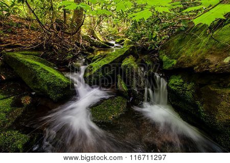 Mossy Creek In The Catskills