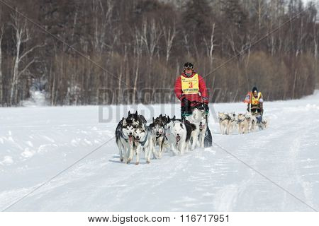 Kamchatka Extreme Dog Sledge Race Beringia. Russian Far East