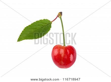Sweet Cherry Merry Isolated On White