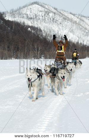 Kamchatka Extreme Dog Sledge Race Beringia. Russia, Far East, Kamchatka Peninsula