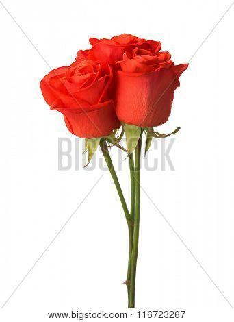 Three bright red roses isolated on white