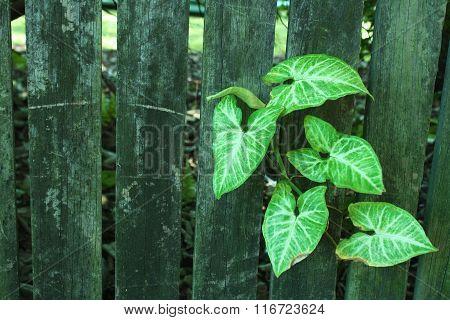 Vintage wood and leaves