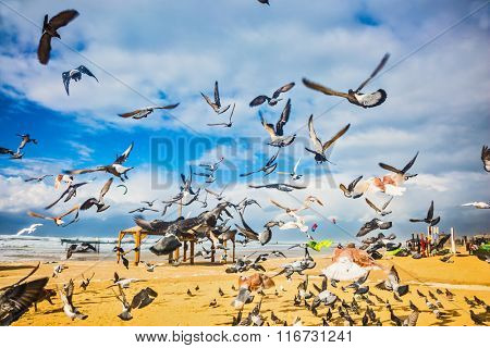 Windy winter day on the Mediterranean Sea. The big pack of pigeons flies up from a sandy beach