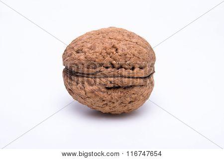 Walnut On A White Background
