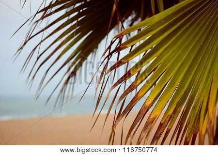 Image of beach through palm tree leaves