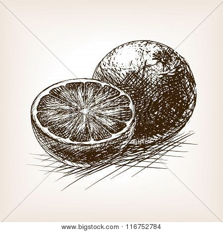 Orange citrus fruit sketch vector illustration