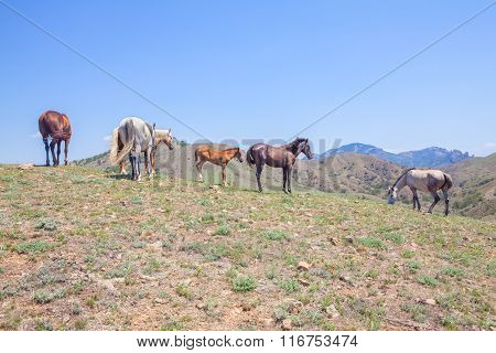horses grazing on the hill